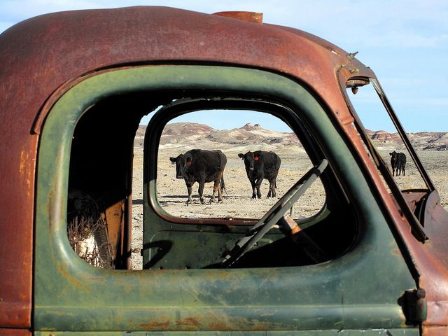 cool photo of old truck and black cows through the window, The History of Silence
