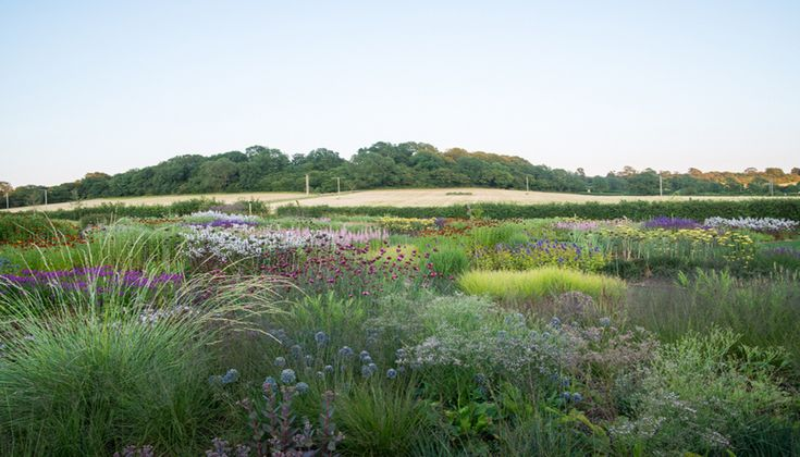 Piet oudolf for hauser and wirth in bruton somerset uk for Piet oudolf plant list