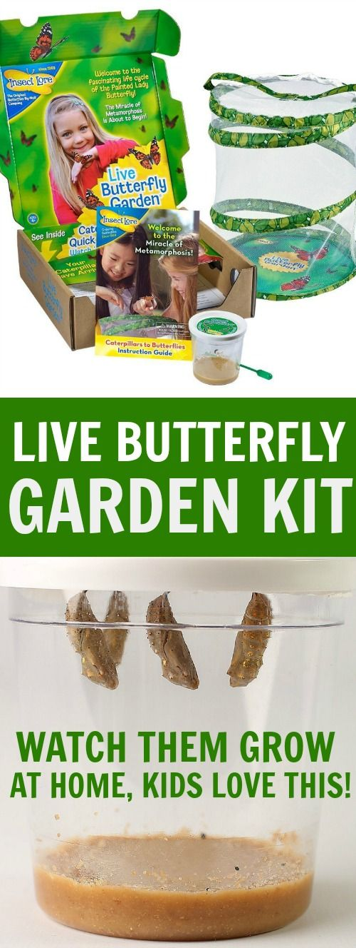 Live butterfly garden kit - watch caterpillars turn to butterflies at home! This is a great summer activity, kids learn the caterpillar to butterfly process and can watch nature happen right in your own yard