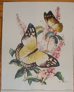 Vintage 4 LGE Butterfly Prints Watercolor Unframed Signed A C Blair Printed USA | eBay