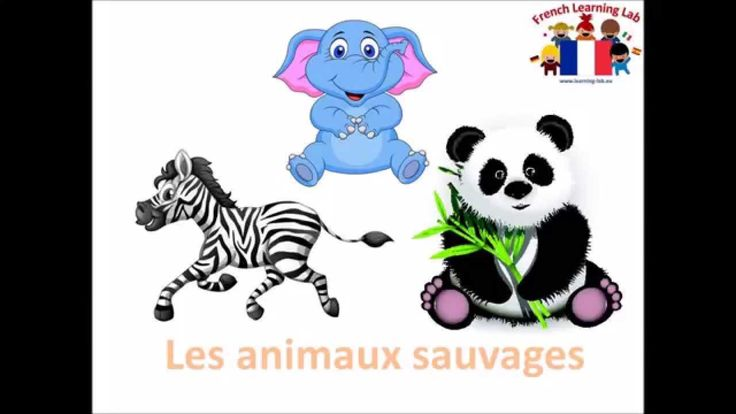 Core vocabulary in French - wild animals / les animaux sauvages.  Spoken by a…