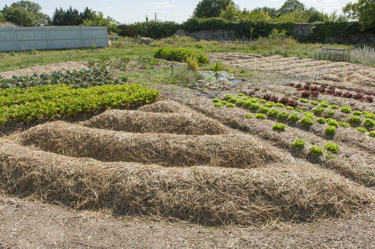 Question permaculture, le butte n'est pas un but en soi. Elle est même souvent déconseillée au regard de la qualité du sol. On s'y penche de plus près.