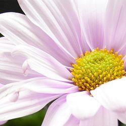 Flori frumoase, fericire Sa rasara-n calea ta, Iar acum, te rog, primeste La multi ani, Lili, din partea mea! http://ofelicitare.ro/felicitari-de-sf-constantin-si-elena/la-multi-ani-lili-323.html