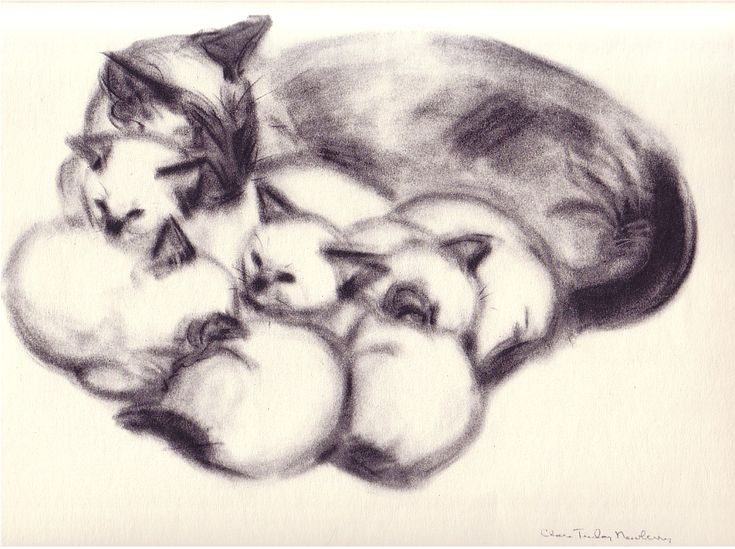 Lilipuss and Kittens |  from CATS & KITTENS A PORTFOLIO, 1956 | by Clare Turlay Newberry