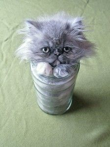 Cat in the cup! @Criatives