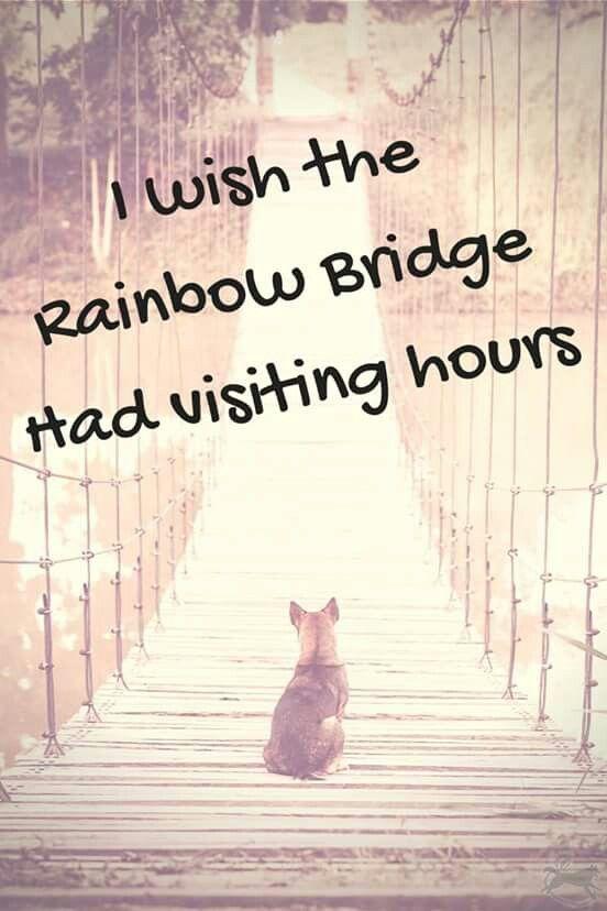 Rainbow bridge visitors