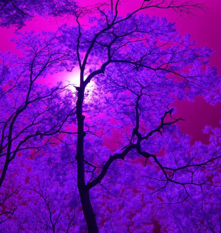 Красивые фиолетовые картинки тумблер, набоков