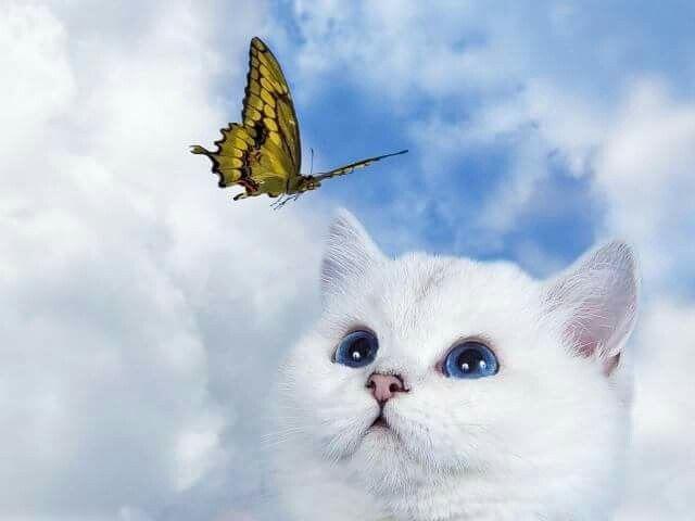 pierderea în greutate kitten)