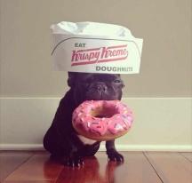 Dog # donuts # funny