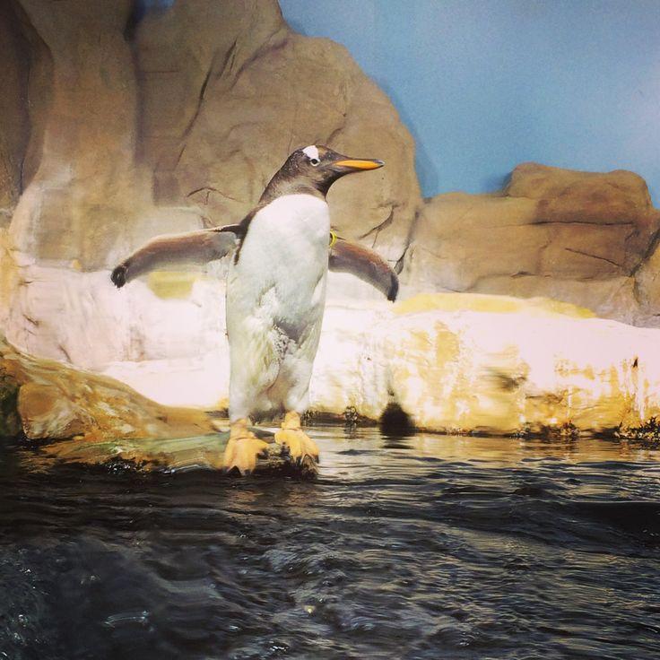 Magnifica visita all'Acquario di #Genova, #Italy #Summer2014