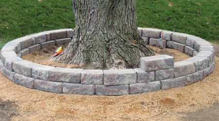 Home-Dzine - How to build a tree ring - Fresh Yard Ideas