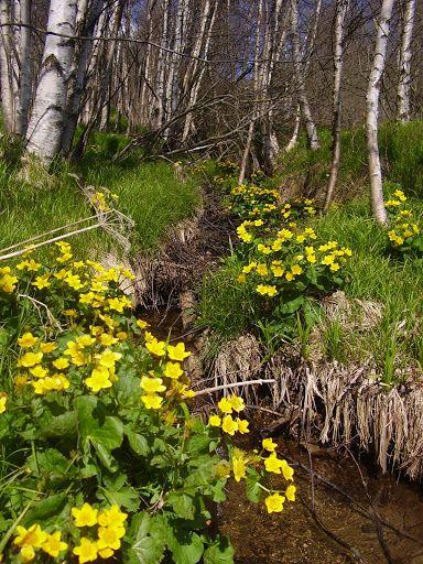 Spring – Ali – Webová alba Picasa
