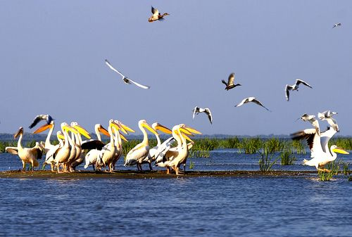 The enticing Danube Delta Biosphere Reserve (DDBR) is a labyrinth of water and land, composed of endless number of lakes, islands and channels at the end of a 2,860 km-long river, hosting more than three hundred species of birds