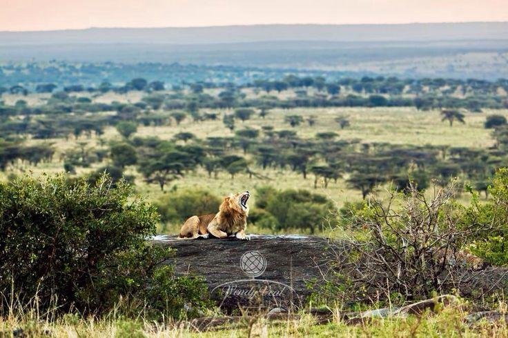 #Tanzania#tourism#nature#animal#safari#serengeti