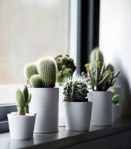 Cactus en decoración
