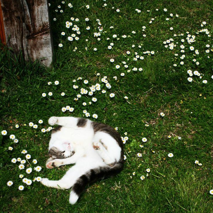 Tofu and daisy