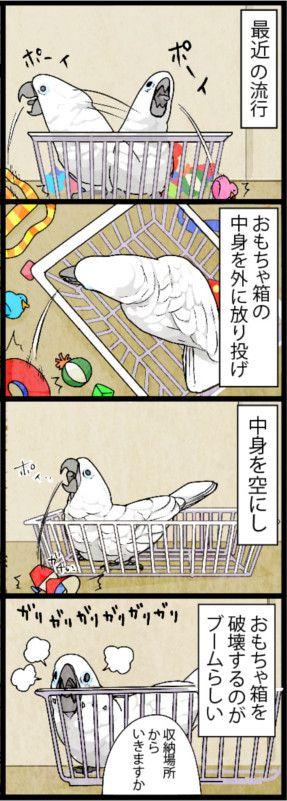 漫画「いたずらオウムの生活雑記」 (188) まずは収納場所から   ライフスタイル   マイナビニュース