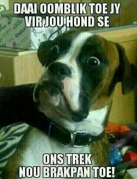 Afrikaanse humor  Daai oomblik toe jy vir jou hond se ons gaan brakpan toe trek.