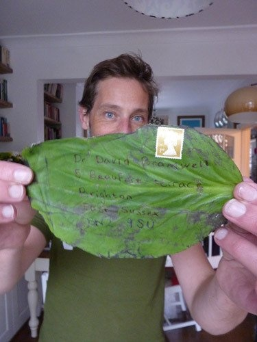 A tropical leaf which was sent through the post.