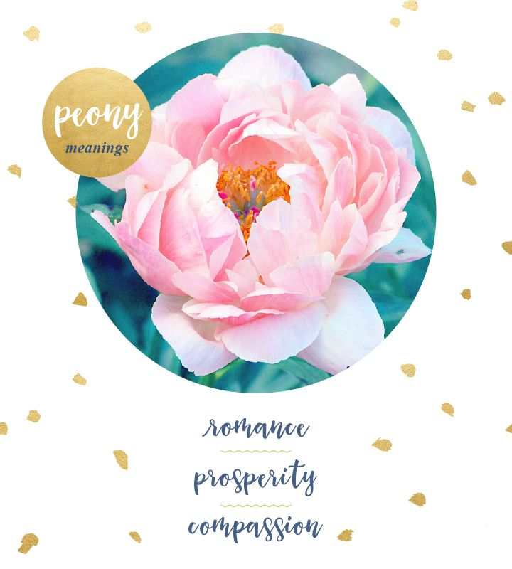 Significant both historically and mythologically, the peony is tied to many different meanings including prosperity, good fortune, honor, and compassion