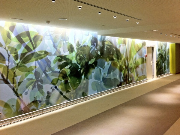 Green Office | Window Film Layered Effect On The Windows | Glass Foil.  Office Wall GraphicsWindow GraphicsEnvironmental ...