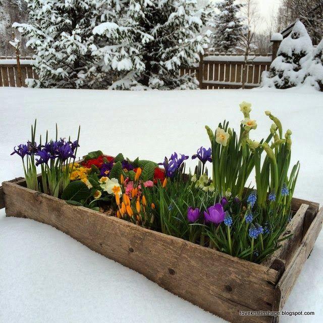Tove Kristins Hage: Store kontraster, vår vinter.