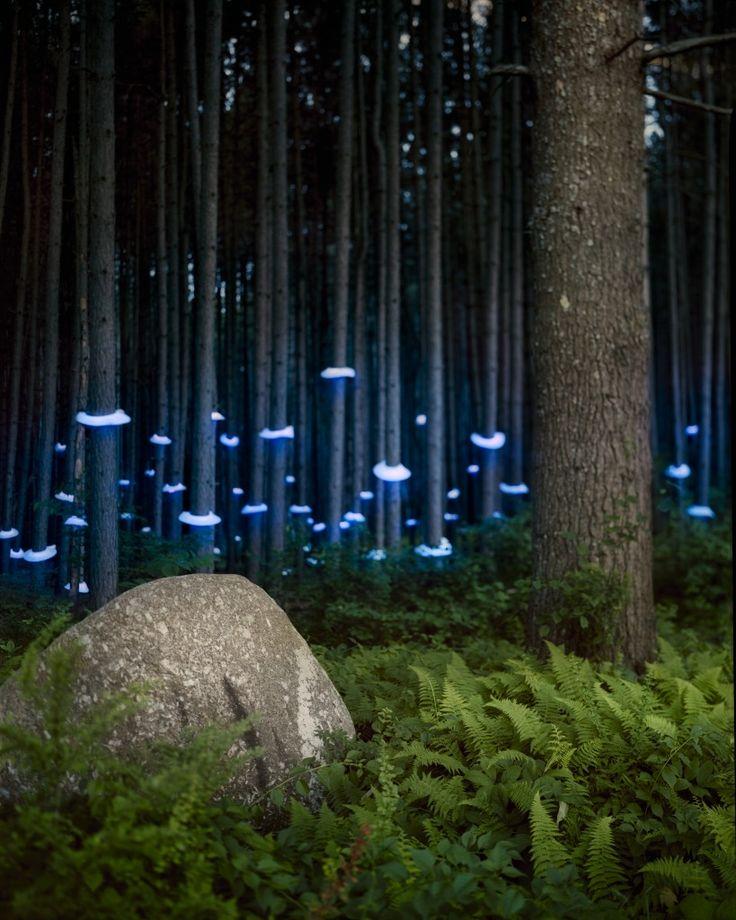 BarryUnderwood-FernsDark Forest, Lights Art, Trav'Lin Lights, Lights Installations, Lights Sculpture, Barry Underwood, Art Installations, Art Pictures, Barryunderwood