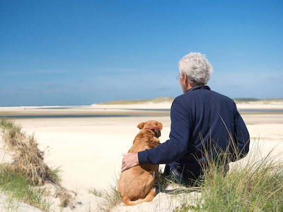 More Illness and Pain Follow Longer Lives For Pets – Disease and Pain Management in Older Pets   petMD