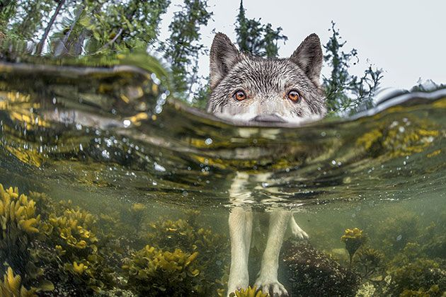 national geographic photo of the day internet favorites 2015