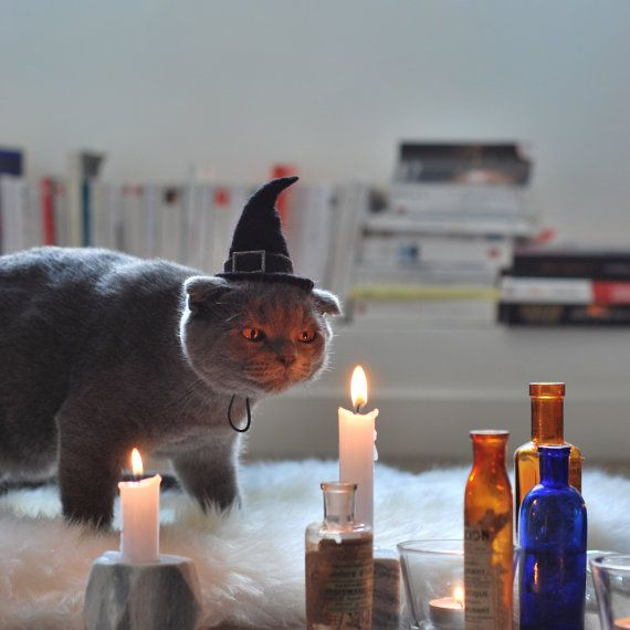 Cat Costume - Witch Hat - Hissy Witch - Cat Halloween Costume - Pet Halloween…