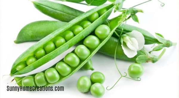 10 Awesome Vegetable Plants For Beginning Gardeners Sugar Snap