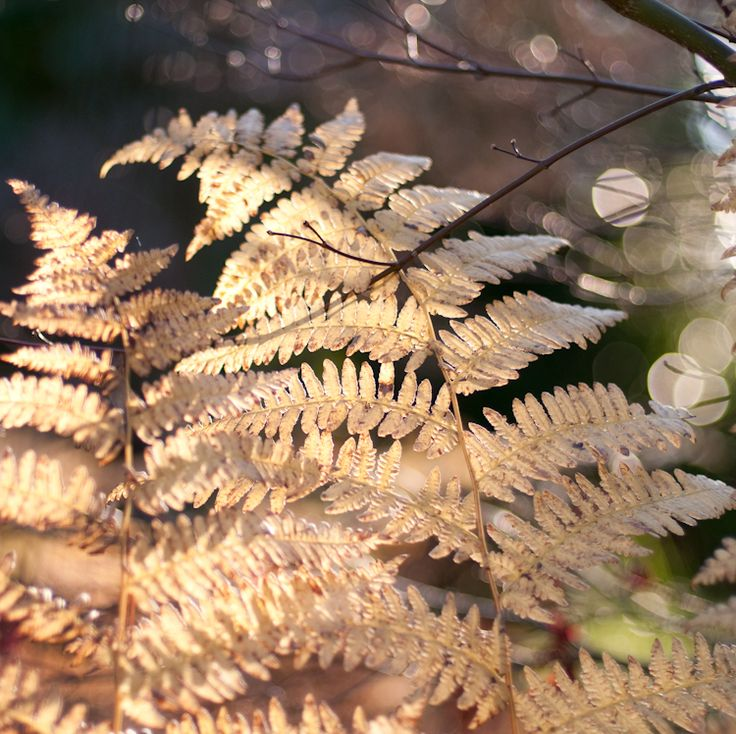 golden brown fern: Patterns Inspiration, Favorite Places, Golden Brown, Brown Ferns, Ferns Favorite, Finding Inspiration, Night Drawings, Drawings Closer, Cores Patterns