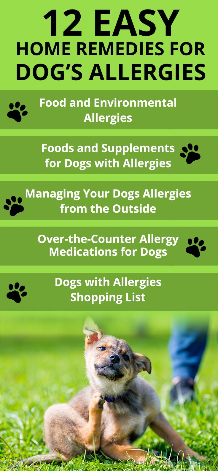 The Ultimate Guide To Home Remedies For Dog Allergies Dog
