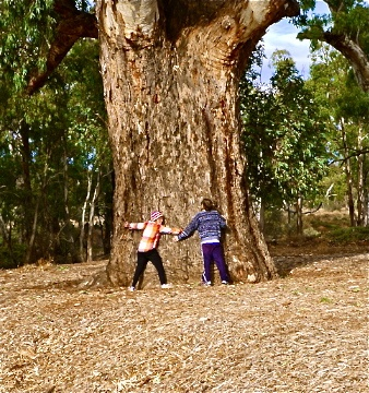 The biggest gum tree in Australia deserves a hug...... it was Treemendous! I just couldn't leaf it alone ;) - At Orooroo, South Australia. #greatwalker