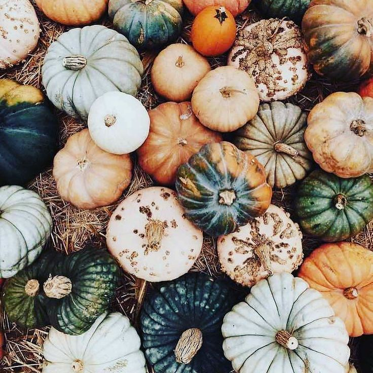 These pumpkin pics are the . Borrowed from Pinterest because we just don't have these amazing pumpkin displays here in the U.K. love these colours though