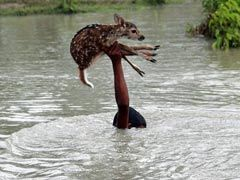 In Assam's Flood Report To Rajnath Singh, A Famous Photo From Bangladesh