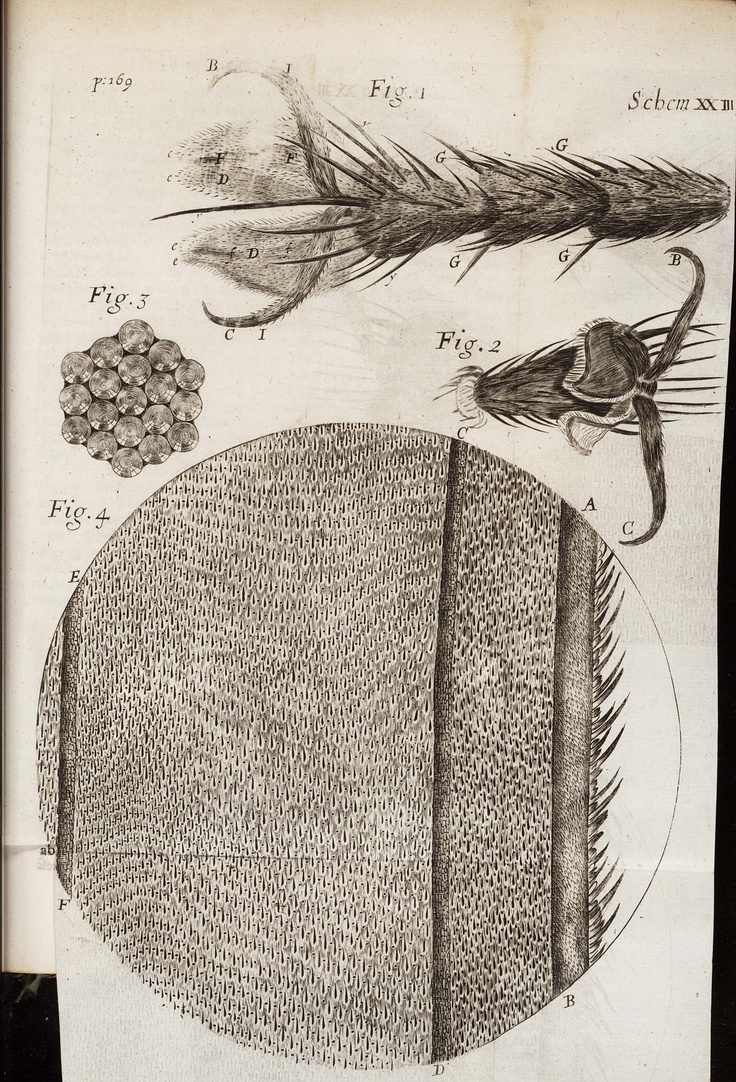 robert hooke Dr robert hooke was an exceptional man scientist, astronomer, philosopher,  architect and inventor, in collaboration with sir christopher wren he designed the .