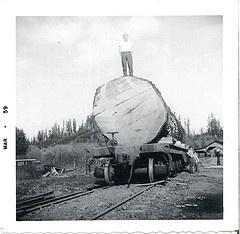 Oregon logging history - Google Search