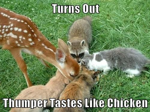 Chicken Humor Funny: Best 20+ Chicken Humor Ideas On Pinterest