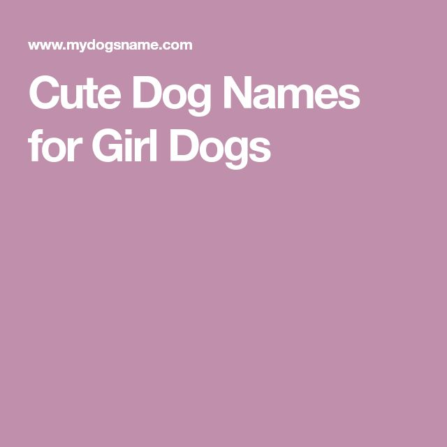 Cute Dog Names for Girl Dogs