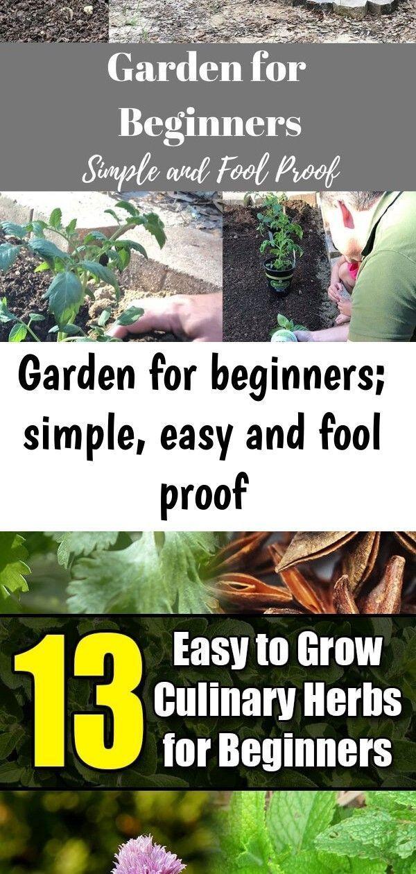 Beginners Easy Fool Garden Proof Simple Easy Garden For