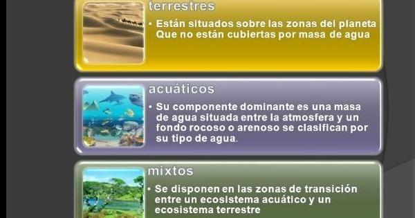 Qué Tipos De Ecosistemas Hay Tipos De Ecosistemas Ecosistemas Masas De Agua