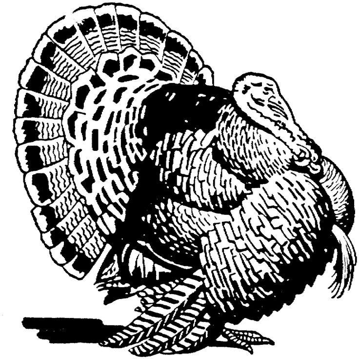 26 best Thanksgiving images on Pinterest Wild turkey Turkey