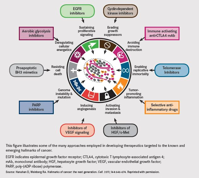 Strategies Targeting the Hallmarks of #Cancer - This figure illustrates some of the many approaches employed in developing therapeutics targeted to the known and emerging hallmarks of cancer.    EGFR indicates epidermal growth factor receptor; CTLA4, cytotoxic T lymphocyte-associated antigen 4; mAb, monoclonal antibody; HGF, hepatocyte growth factor; #VEGF, vascular #endothelial growth factor; PARP, poly-(ADP ribose) polymerase.