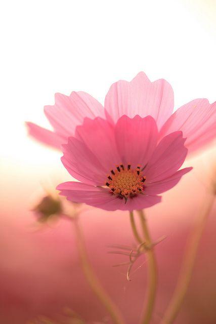 O  delicado do tom rosa