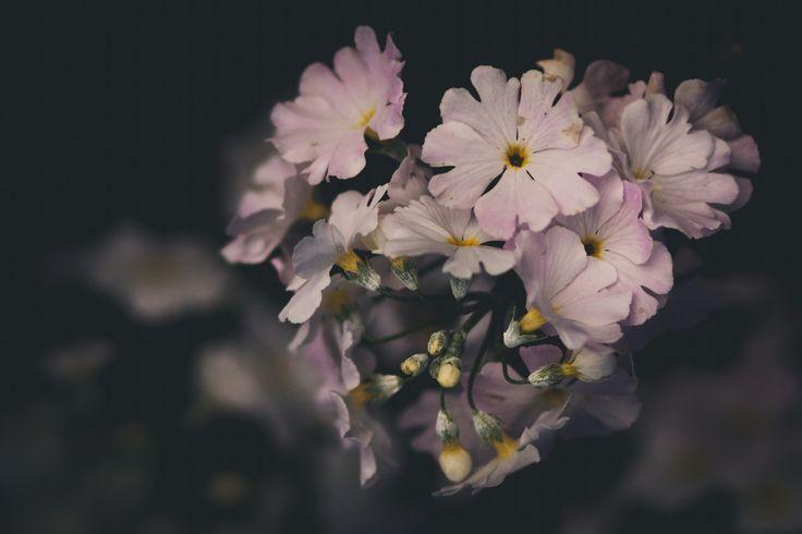 flower. by Mynk Krystal on 500px