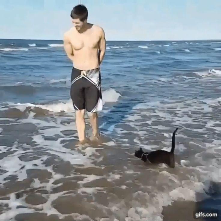 This Cat….. – Katzen