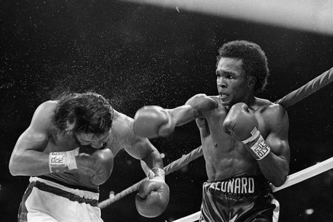 "Sugar Ray Leonard || Sugar Ray Leonard was born on May 17,1956 in North Carolina. He won the gold medal in light-welterweight boxing at the 1976 Olympic Games, and went pro the following year. His 1987 defeat of ""Marvelous"" Marvin Hagler for the World Boxing Council's middleweight title is considered one of the greatest professional boxing matches of all time. Leonard retired in 1997, and was inducted into the Boxing Hall of Fame. Check out his signed memorabilia by clicking the link."