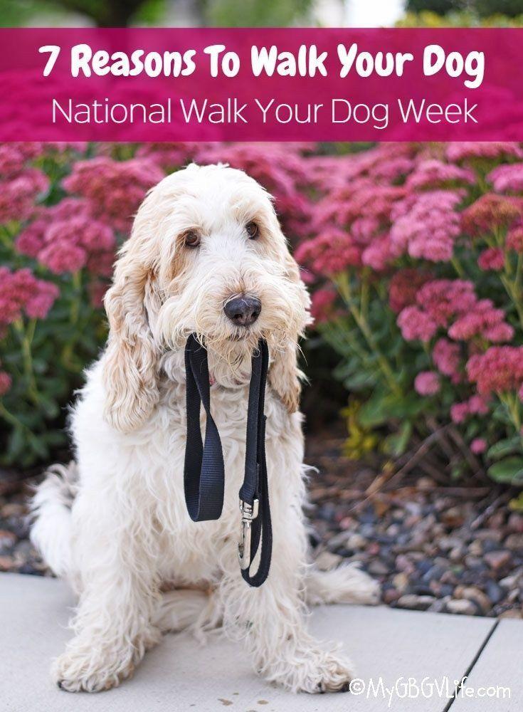 Pin On Dog Health Care Advice