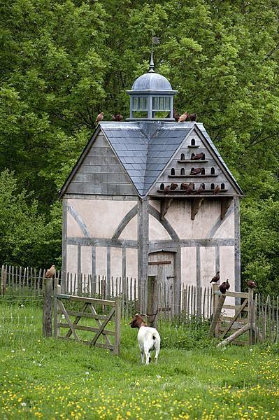 Duiventil - house with pigeon loft attic duiven #pigeons
